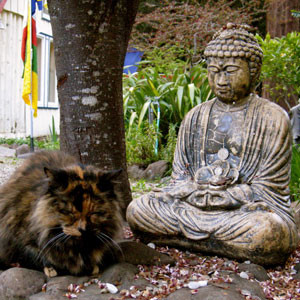 Resident cat meditating with the Buddha.