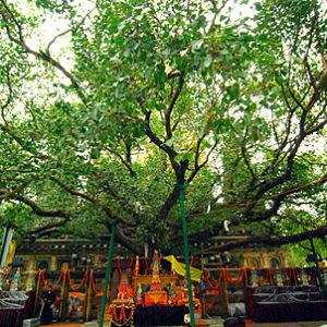 Sakadawa: Buddha's Enlightenment and Parinirvana