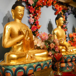 No Medicine Buddha Meditation today