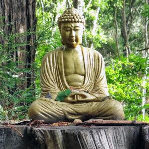 Experience Meditation with Venerable Yönten